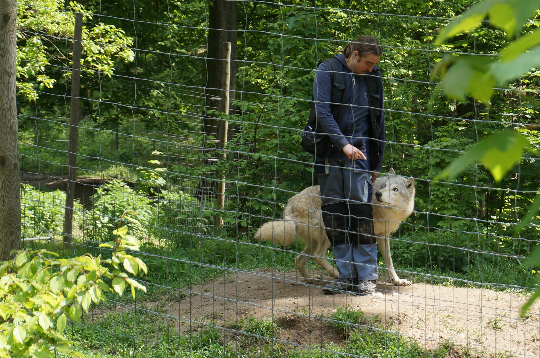 Geheimtipps im Wiener Umland – Wolf Science Center Ernstbrunn
