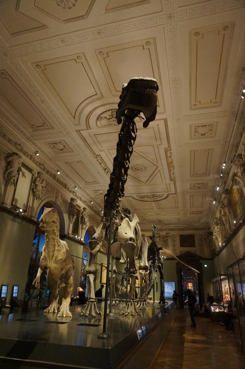 NHM Dino