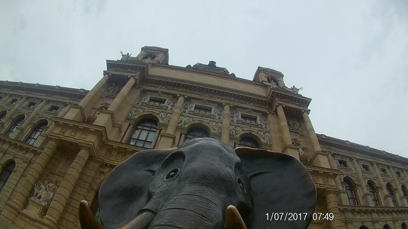 NHM Elefant