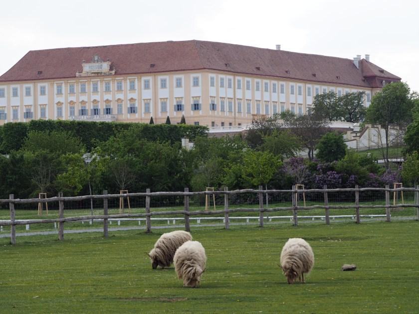 Schafe und Schloss.JPG