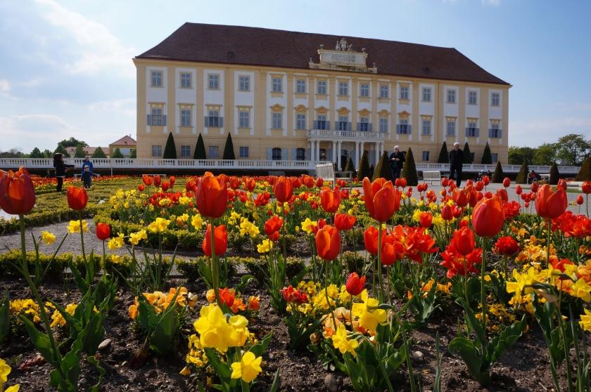 Schloss und Tulpen.jpg