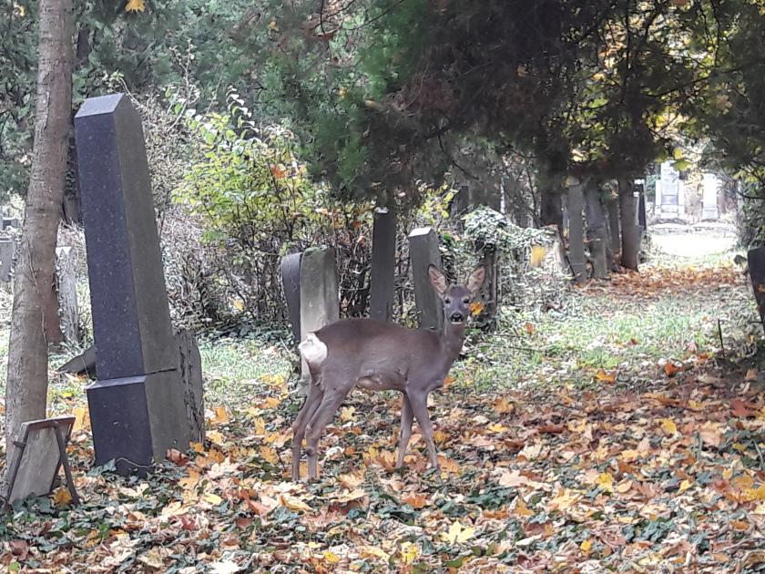 zentralfriedhof-teaser