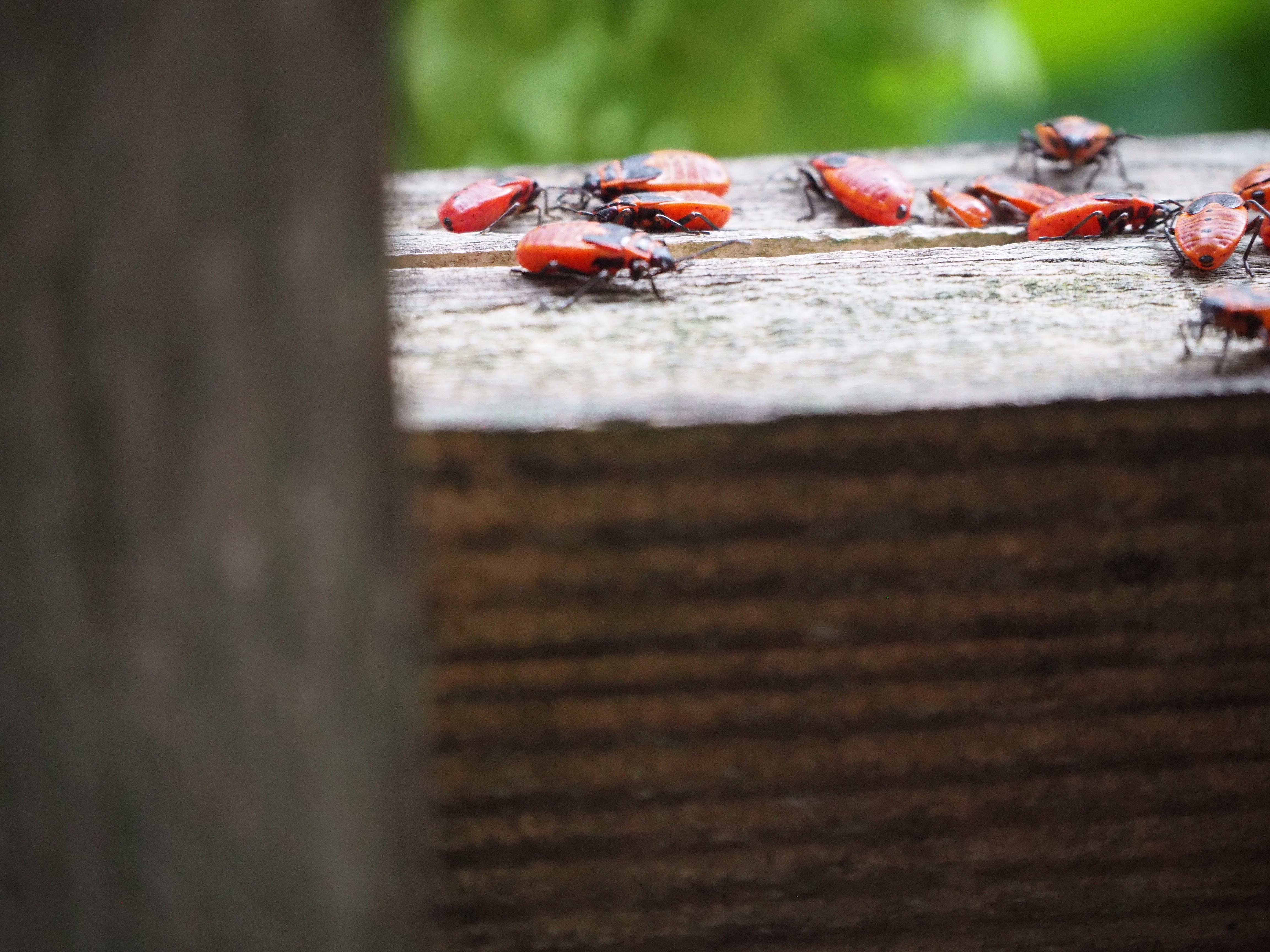 Natur pur – was krabbelt denn da?