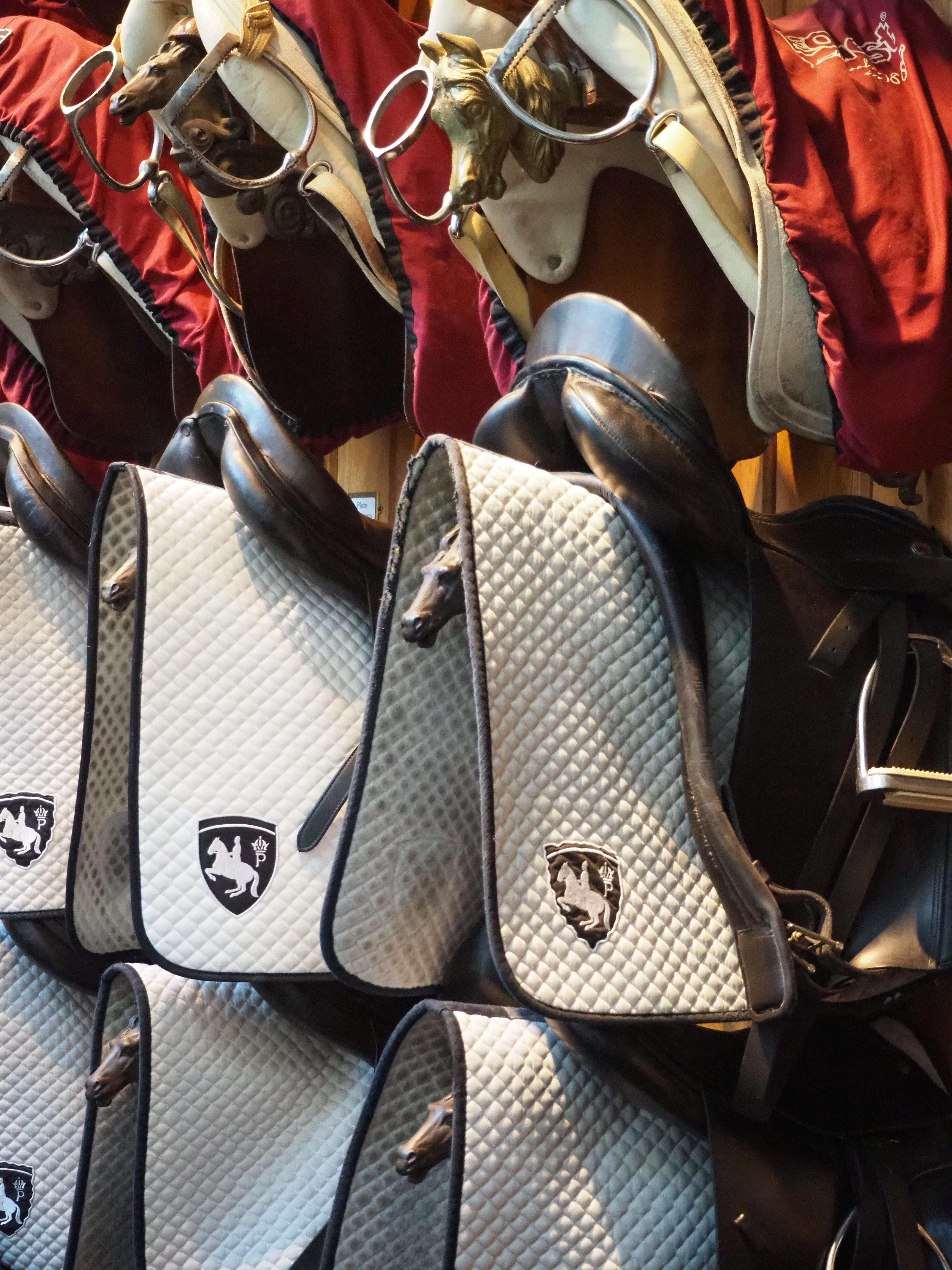Imperiale Pferde – Zu Besuch in der Spanischen Hofreitschule in Wien
