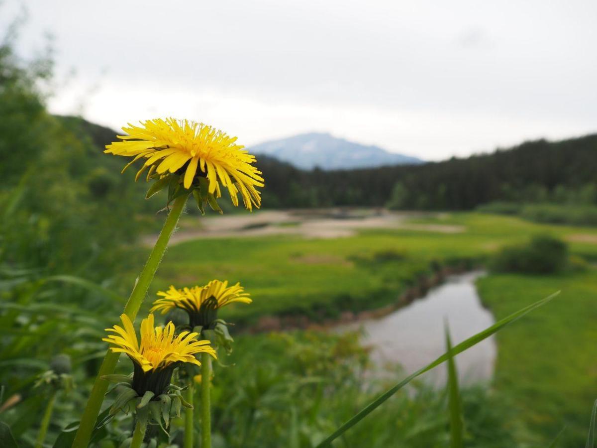 #Staycation: Wandern in den Ötschergräben von Wienerbruck zum Erlaufstausee